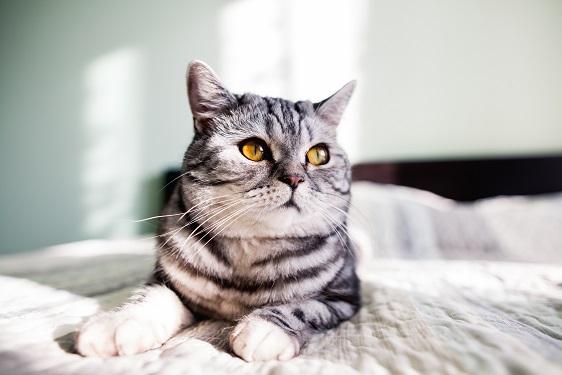 אמפולות לחתולים